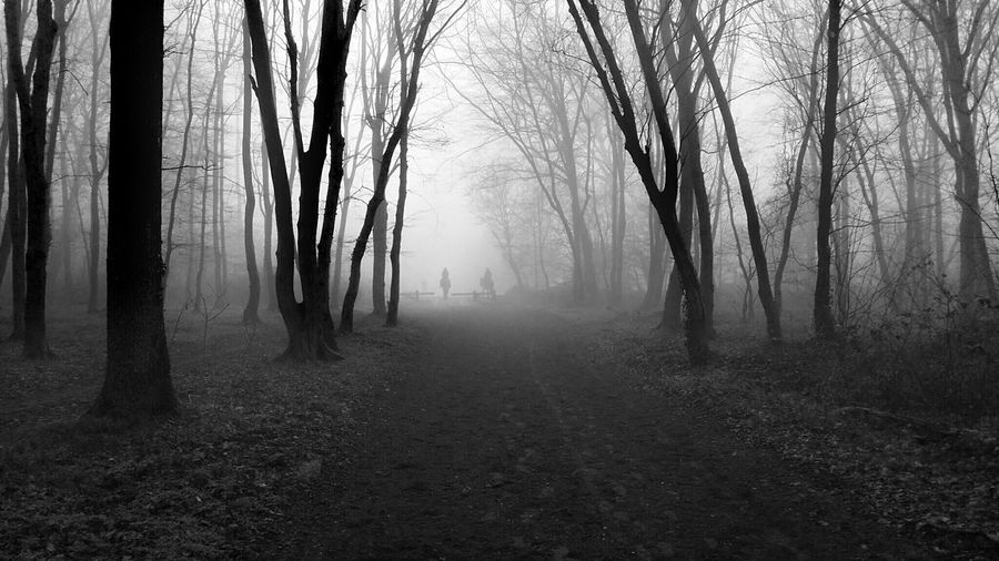 Tree Nature Fog Forest Landscape Monochrome Eye4photography  Fine Art Photography Shootermag EyeEm Masterclass Eyeem Collection