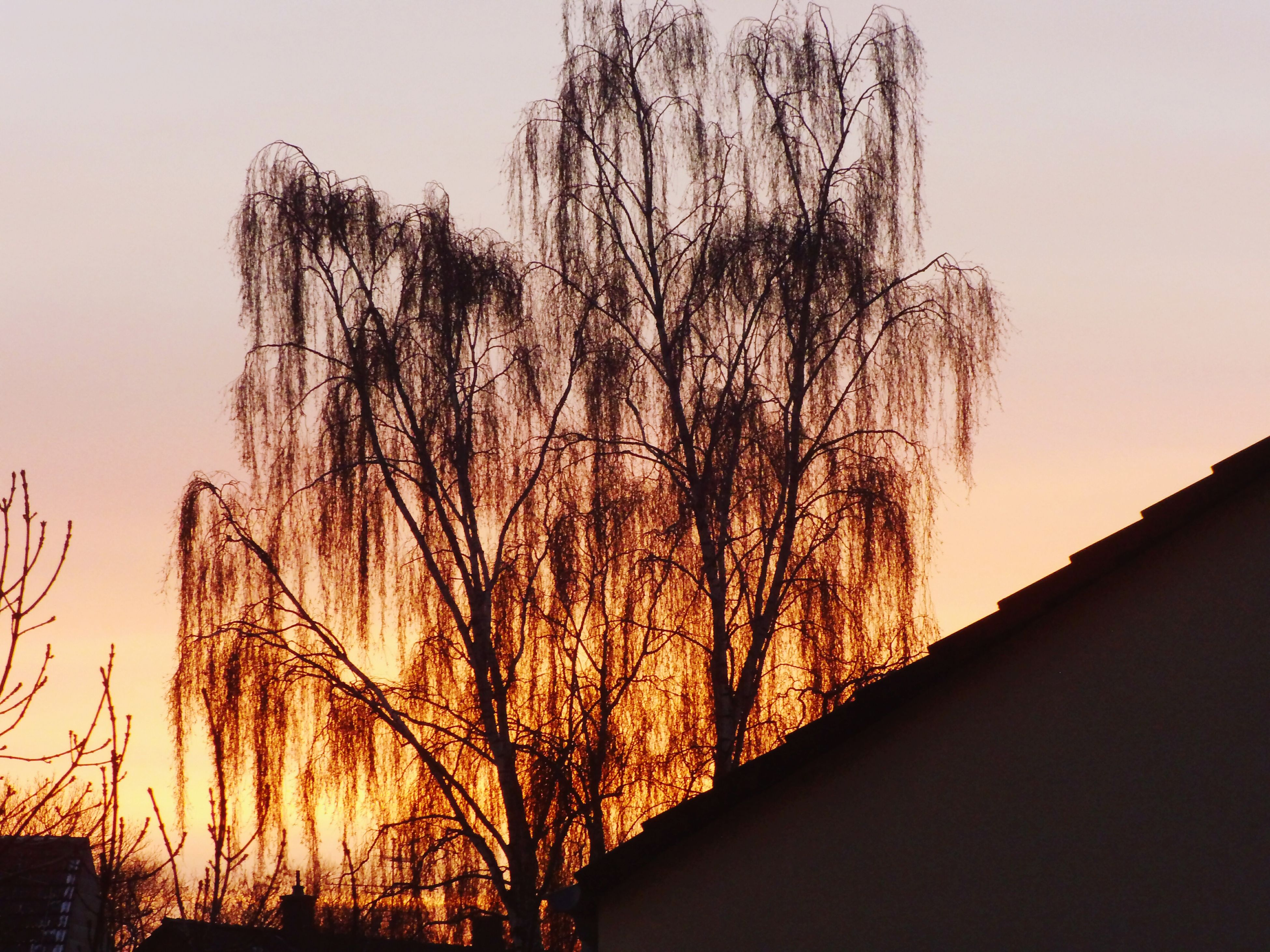 silhouette, sunset, bare tree, tree, branch, built structure, building exterior, architecture, low angle view, clear sky, sky, nature, orange color, tranquility, beauty in nature, tree trunk, scenics, tranquil scene, outdoors, no people
