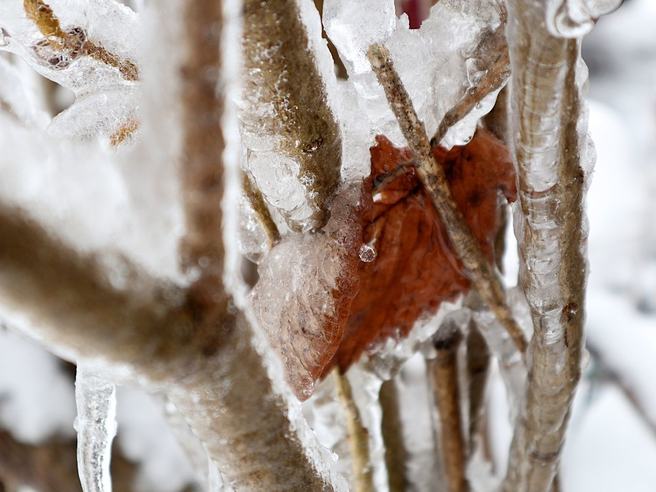 cold temperature, ice, frozen, winter, snow, close-up, no people, weather, icicle, frost, day, outdoors, nature