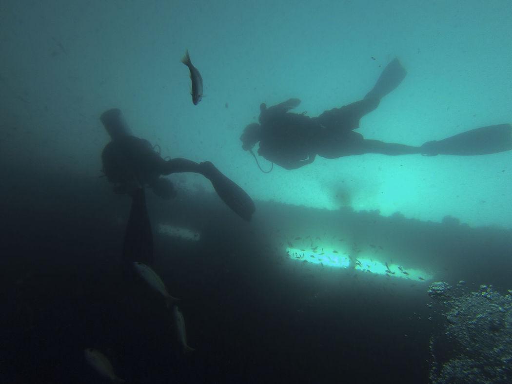 who doesn't belong here - Sugar Wreck, Turtle Bay Divers, pulau Perhentian