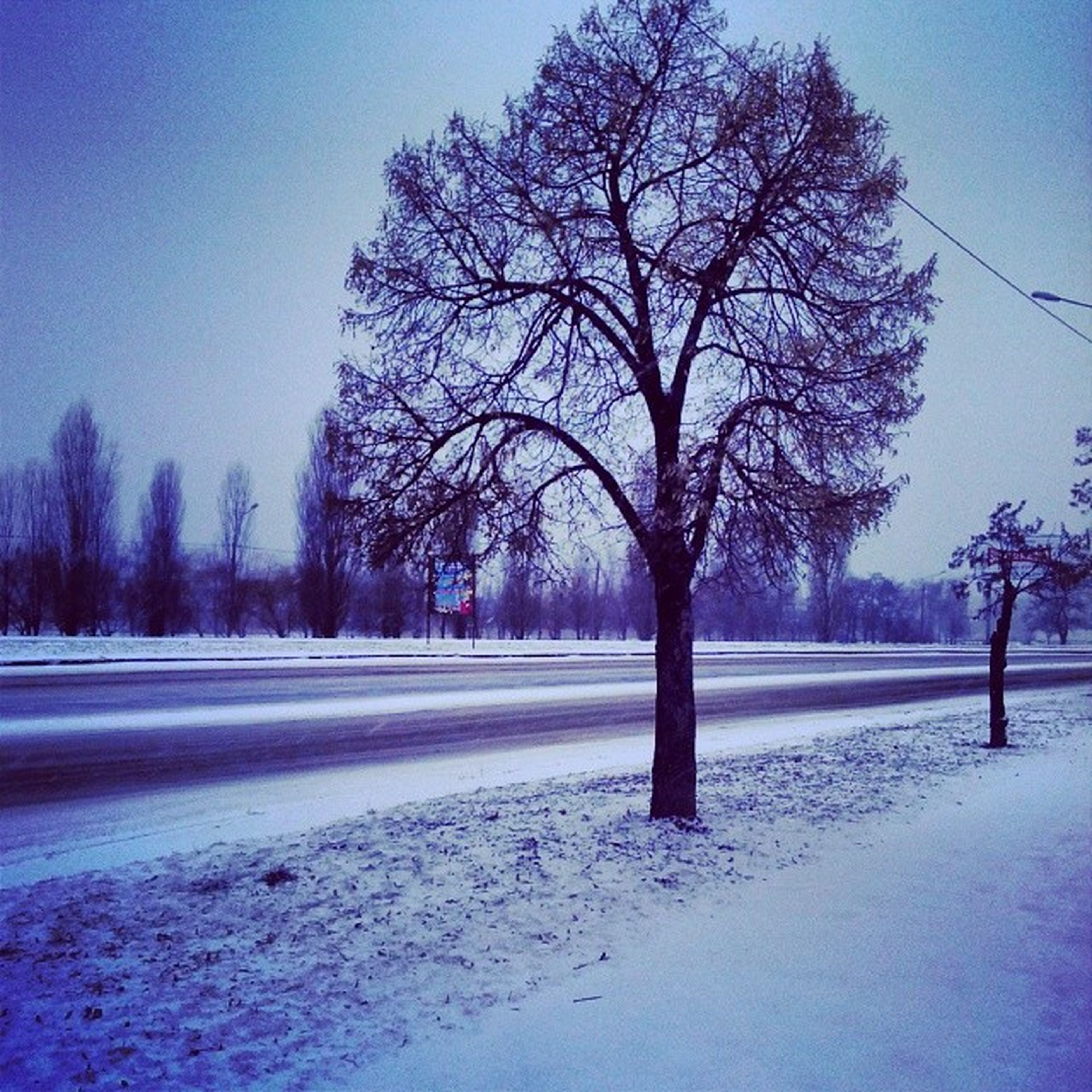 snow, winter, cold temperature, tree, bare tree, season, road, weather, tranquility, tranquil scene, nature, landscape, clear sky, the way forward, beauty in nature, scenics, field, covering, sky, street