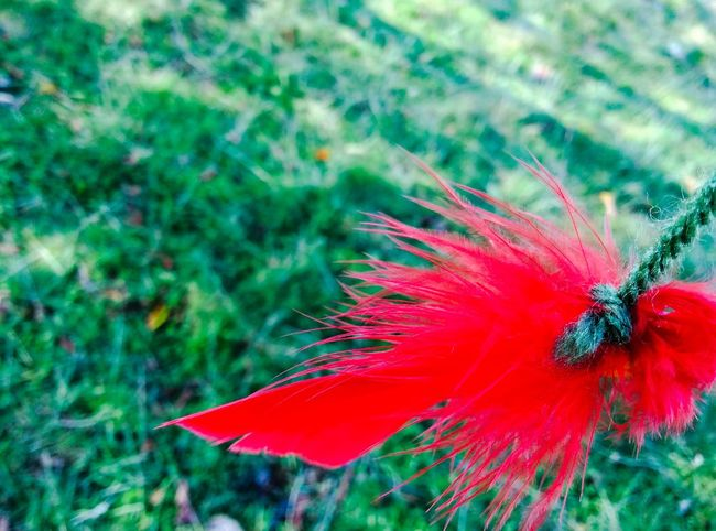Beauty In Nature Close-up Day Flower Flower Head Focus On Foreground Fragility Freshness Growth In Bloom Nature Outdoors Petal Red Red Color Springtime Vibrant Color