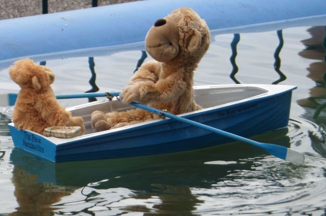Essence of summer. Boating. Rowboat. Toy bears in a rowboat. Boat On Pond. Boating. Boating.summer. Close-up Day Essence Of Summer. Fun Bears In Boat. Fun. FuN....  No People Outdoors Remote Controlled Boat. Rippled Rowboat On Pond. Rowboat. Rowing. Summertime. Teddy Bears Boating. Teddy Bears In Rowboat. Toy........... Water Water.