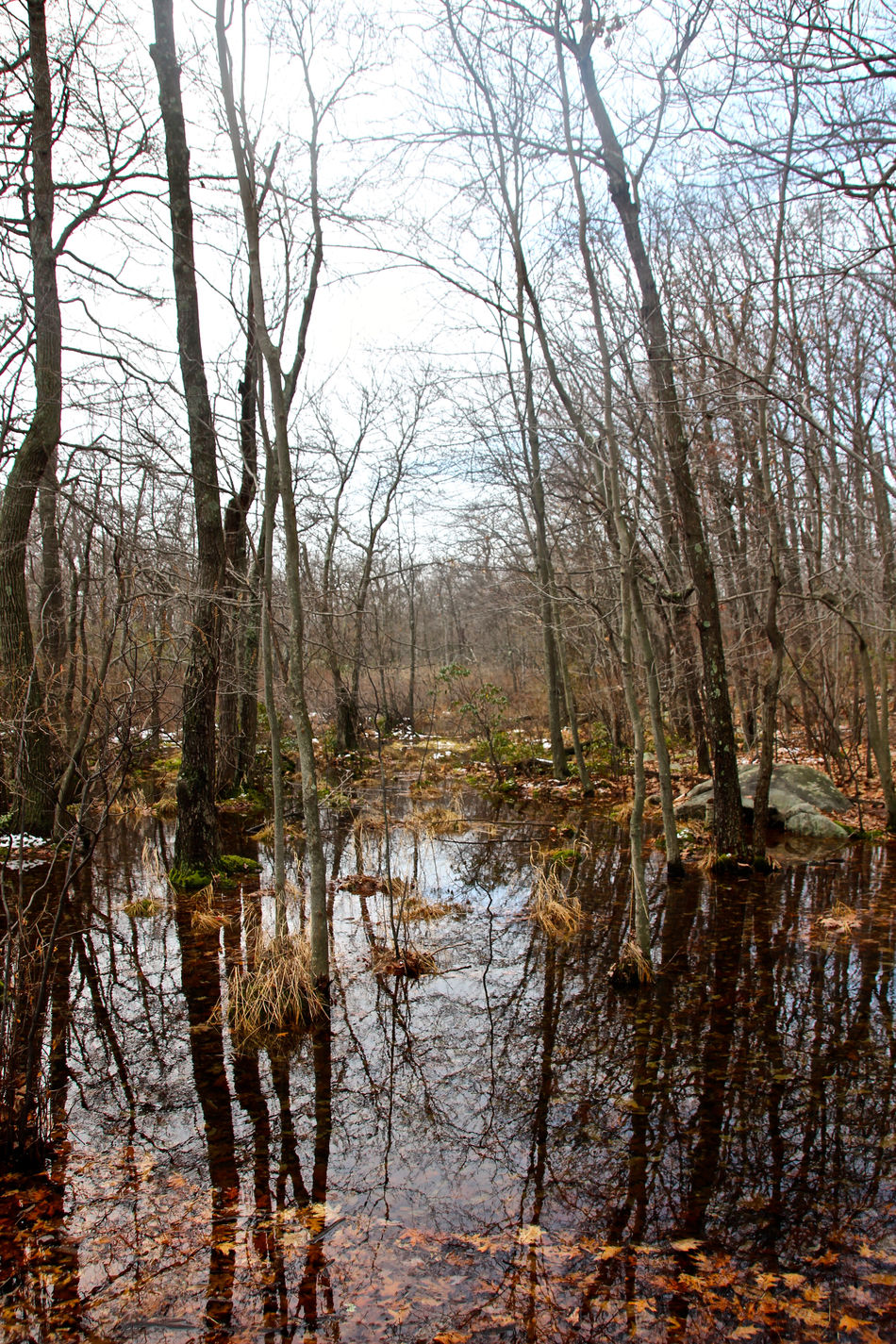 Beauty In Nature Cold Spring Day Forest Growth Hiking Nature New York State No People Outdoors Reflection Reflection Lake Scenics Tranquility Tree USA Water Wetland