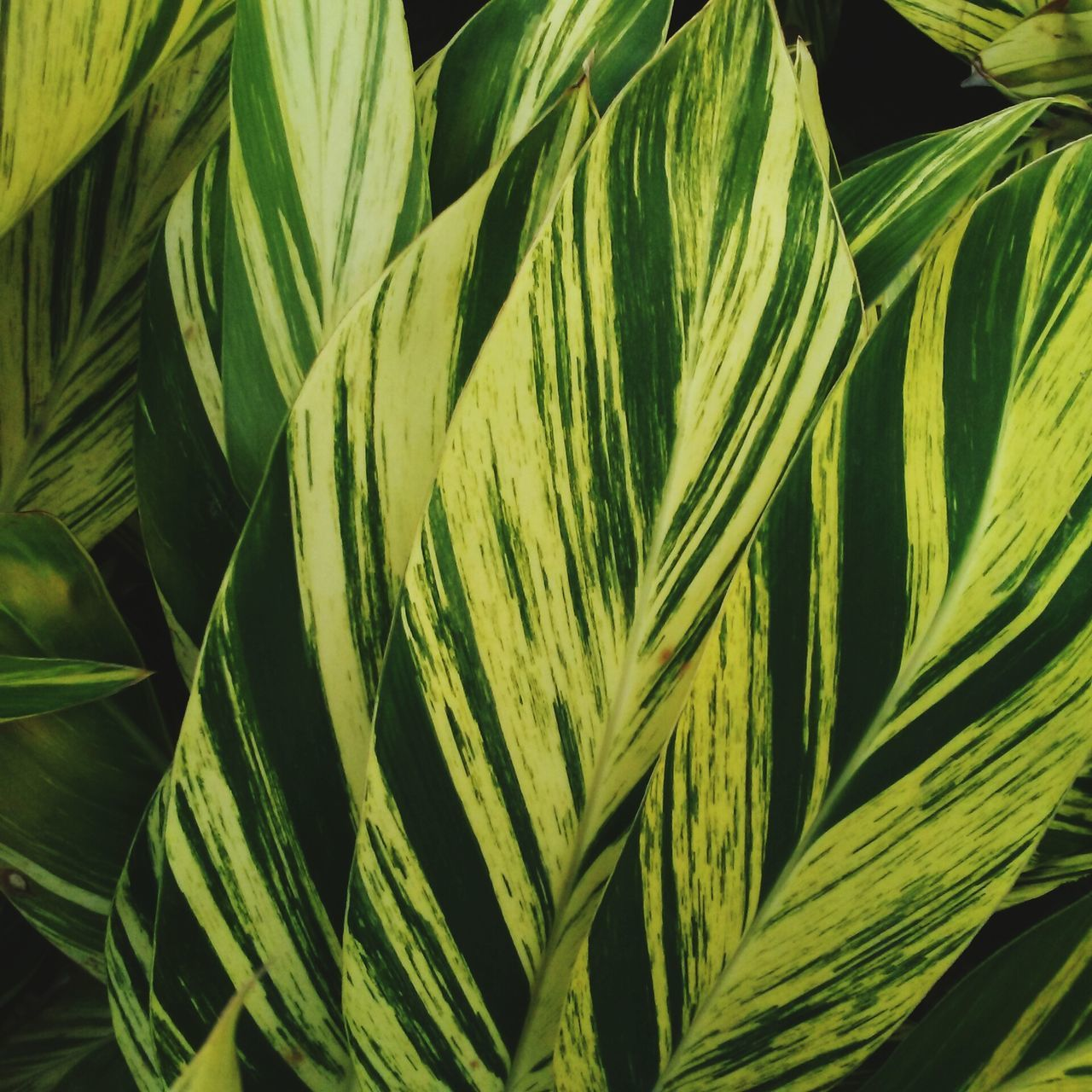 Nature Growth Close-up Green Color Full Frame Backgrounds Leaf Beauty In Nature Pattern Lines And Shapes No People Outdoors Day Freshness Capture The Moment The Purist (no Edit, No Filter) Eyem Best Shots Fragility Freshness Plant Green Color Outdoors Photograpghy