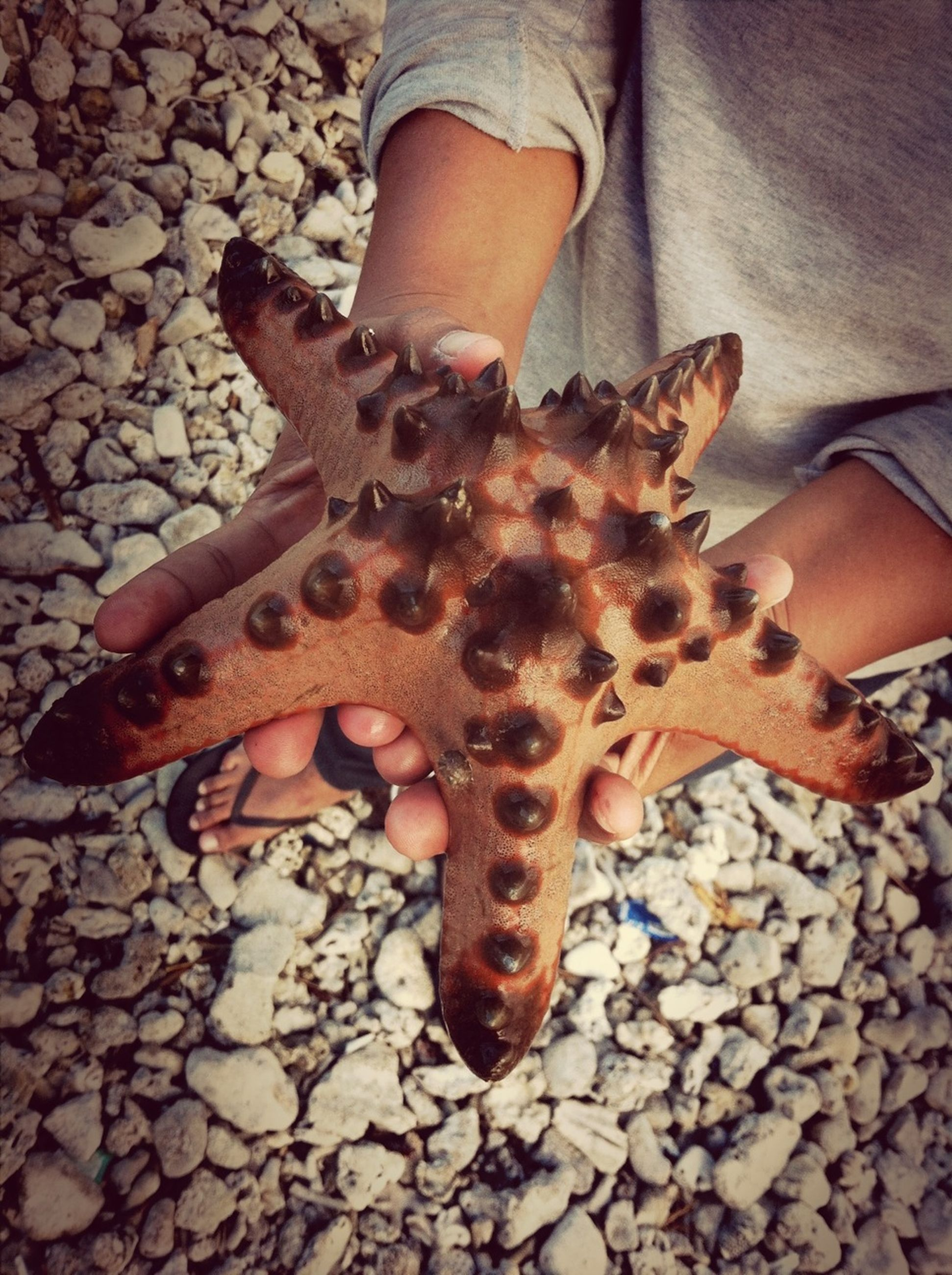 low section, person, animal themes, high angle view, part of, lifestyles, stone - object, one animal, outdoors, starfish, leisure activity, dead animal, shoe, unrecognizable person, standing