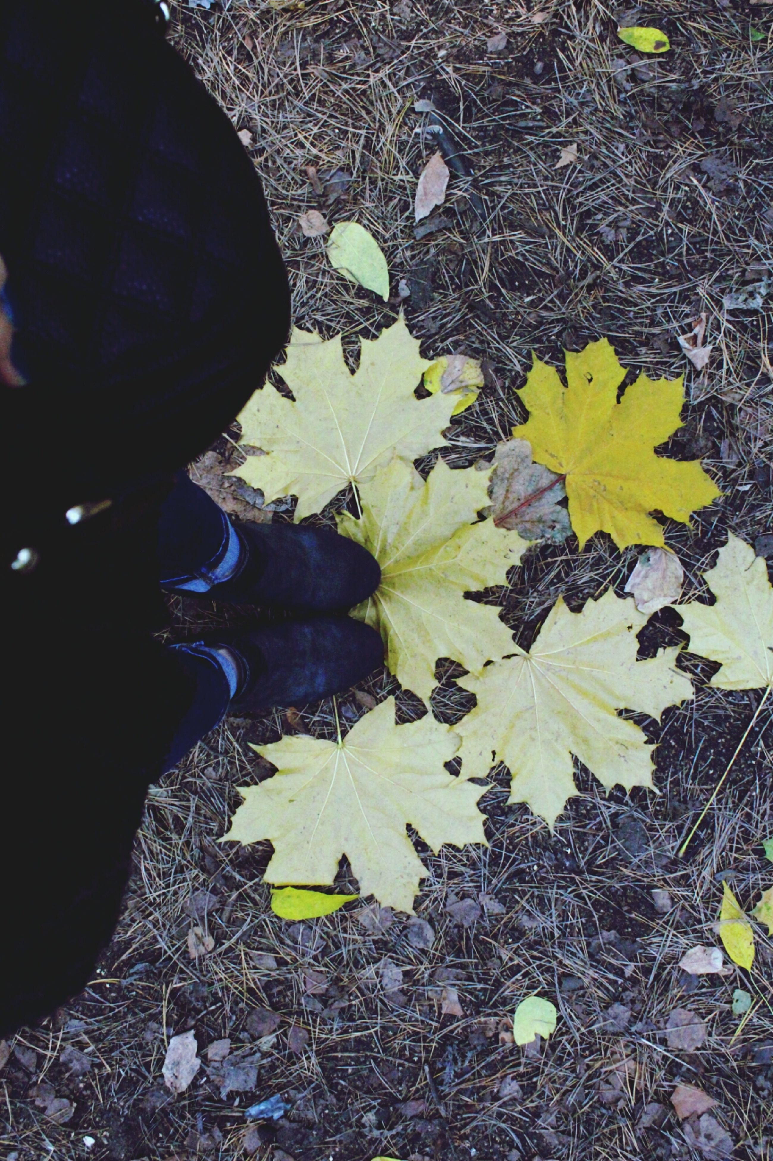 leaf, autumn, leaves, change, high angle view, dry, fallen, low section, season, shoe, nature, person, falling, ground, outdoors, day, yellow