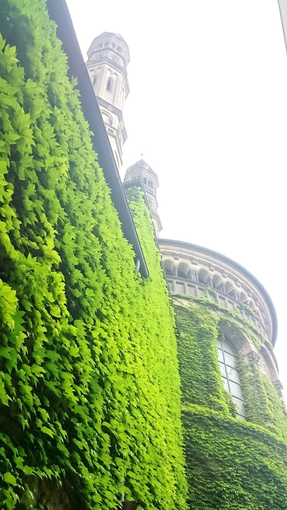 Eyeem Plants Plants On The Wall Nature Vs City Plantlife