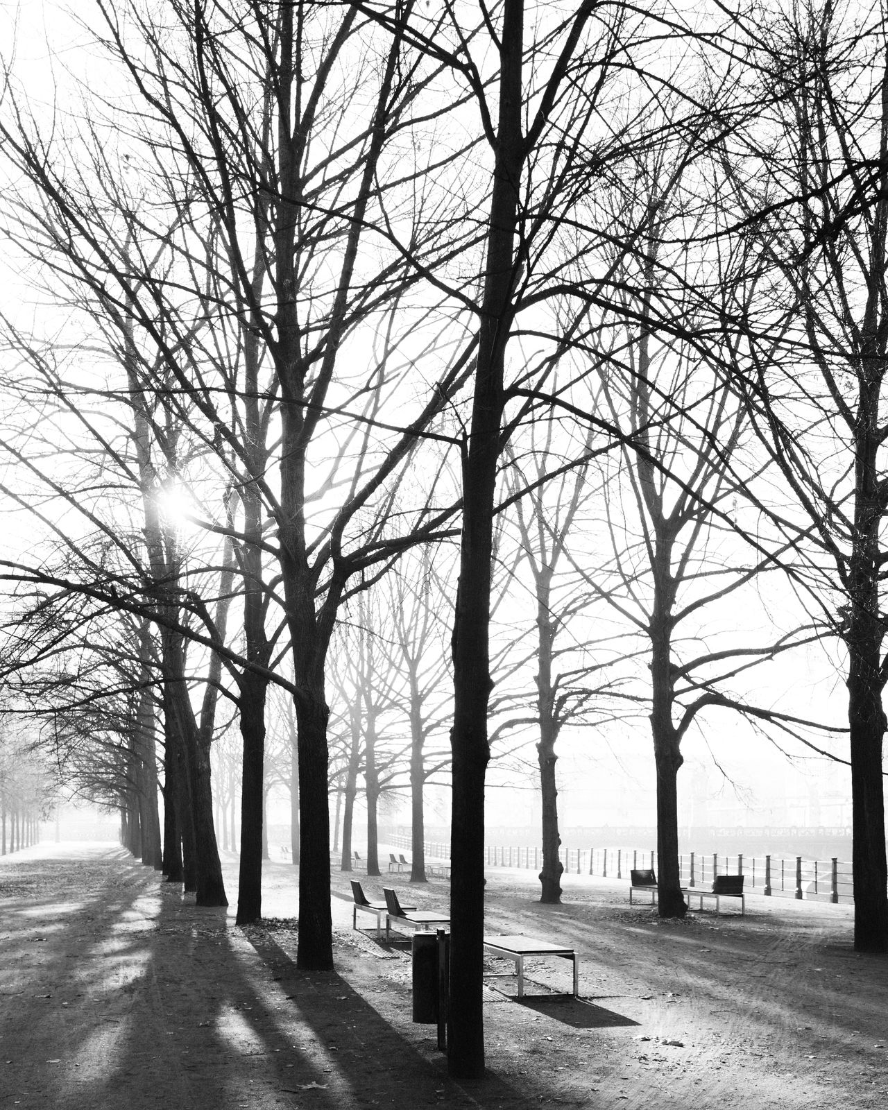 empty park Bare Tree Berlin Lustgarten November November 2016 November Morning S Spätherbst Travel Destinations Tree