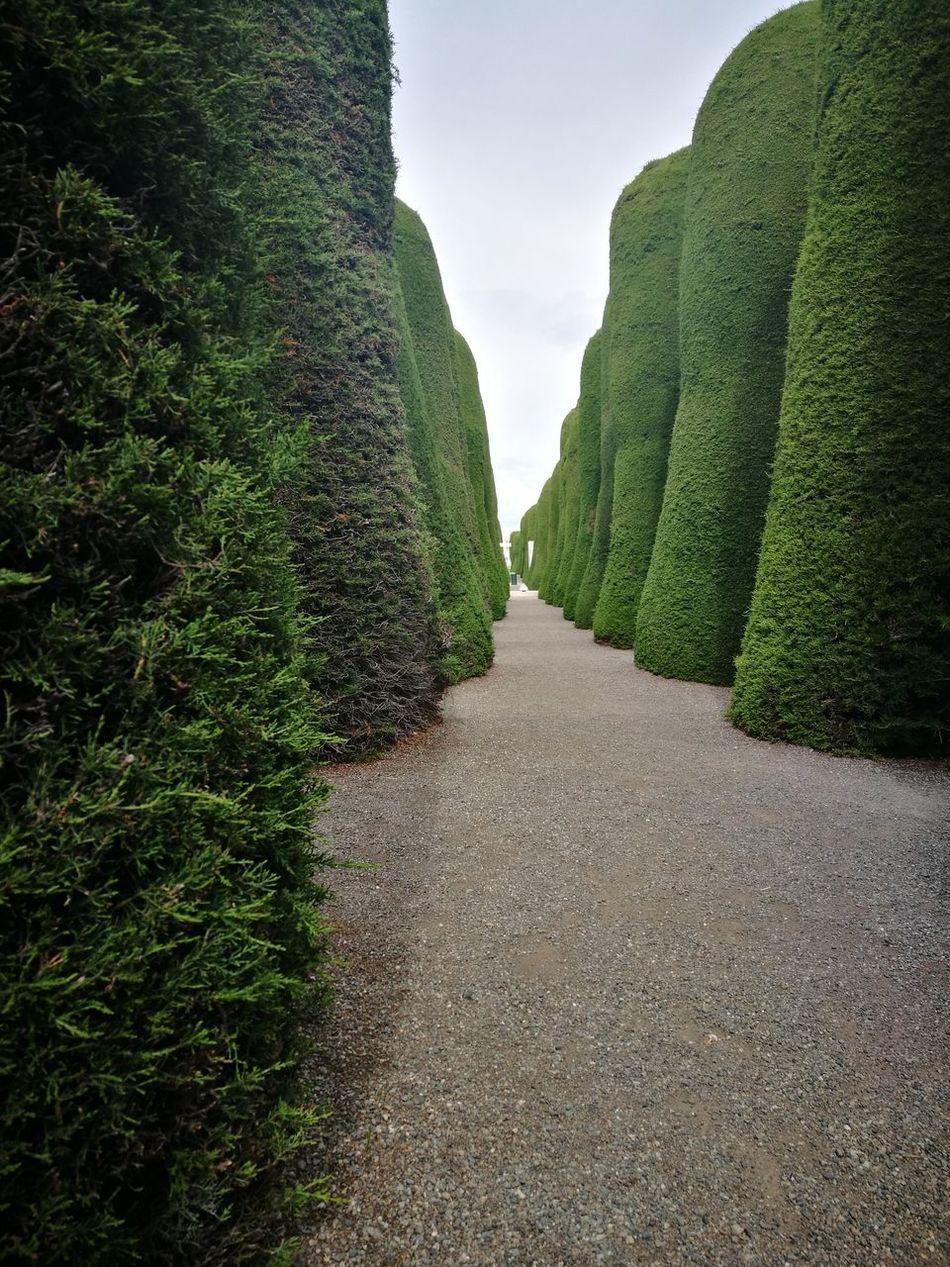 Cementerio en punta arenas... Cementary Corridor Pine Trees Puntarenas Punta Arenas