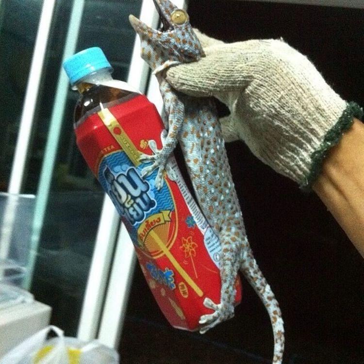 if u need caliper to hold something, i had one !!! Funpic