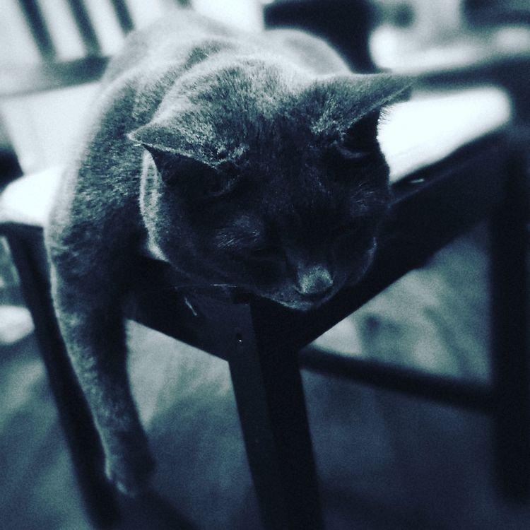 Mysterious Kitty Cat Hard Life.. One Animal Animal Themes Close-up Cats 🐱 Blackandwhite