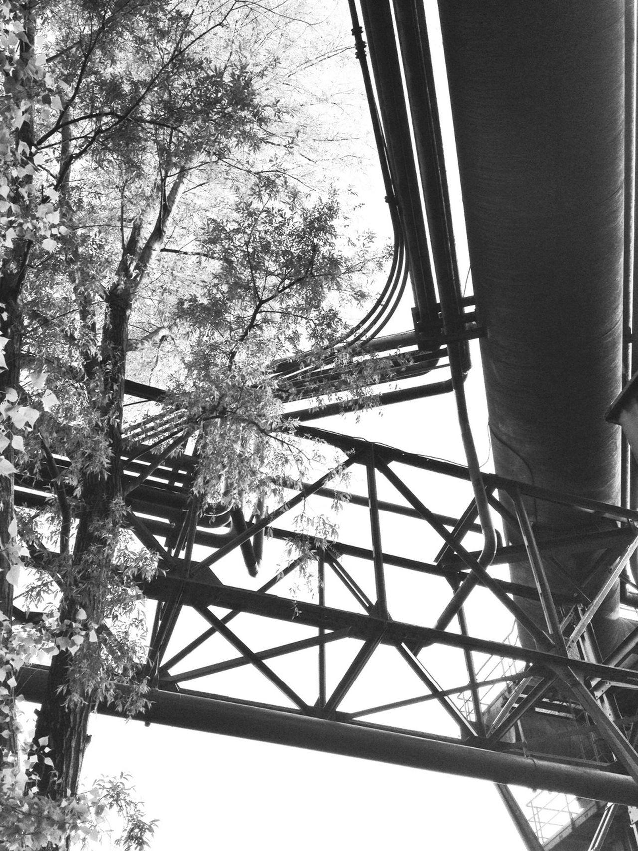 Blackandwhite Urban Nature Hans Guck In Die Luft Geknürzel