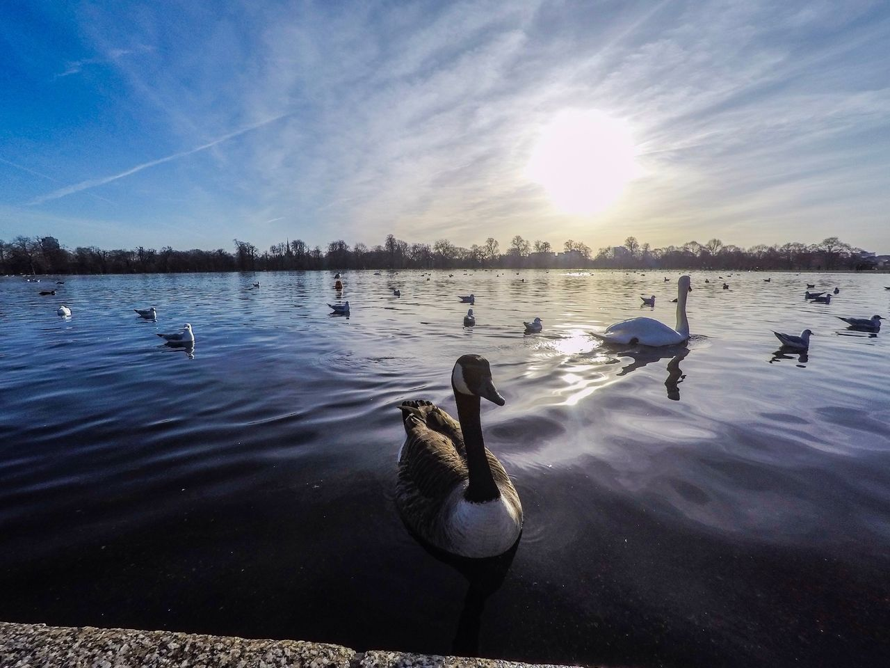 Kensington Park Goprooftheday Bird Animal Themes Animals In The Wild Water Lake Sunlight Sky Nature Animal Wildlife Duck Day Beauty In Nature No People GoPrography Photooftheday