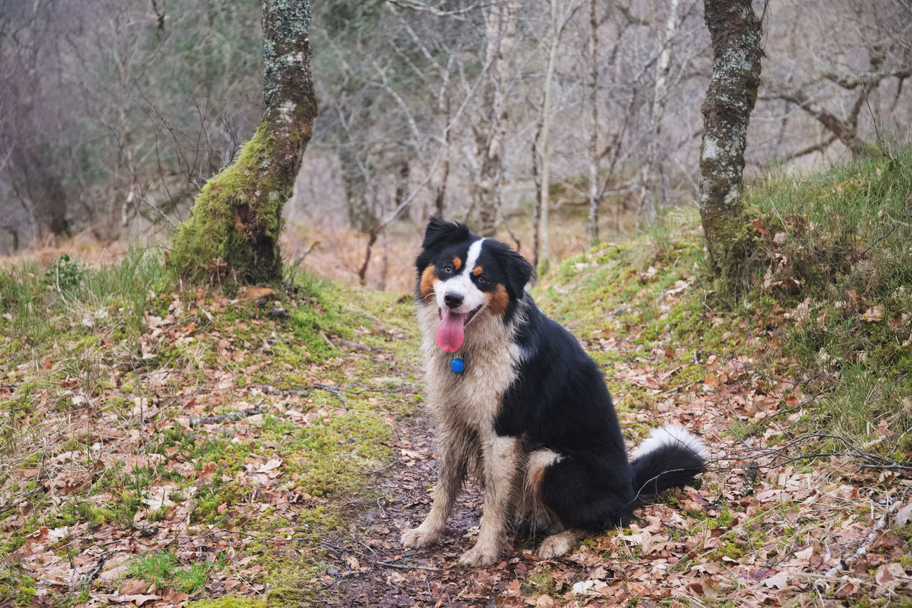 dog, pets, one animal, animal themes, domestic animals, mammal, outdoors, no people, nature, day, tree, grass