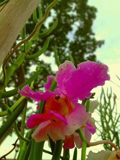 Seeking Light Flowers Fleurs Flowerporn EyeEm Nature Lover
