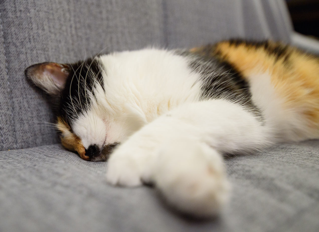 pets, domestic cat, animal themes, domestic animals, one animal, feline, mammal, cat, indoors, sleeping, selective focus, lying down, no people, close-up, relaxation, whisker, day