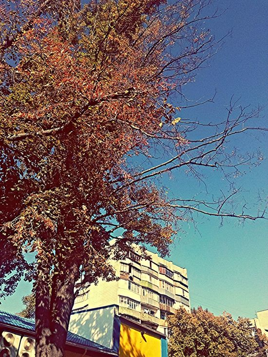 Urban Geometry Citylife Belong Anywhere Hugging A Tree