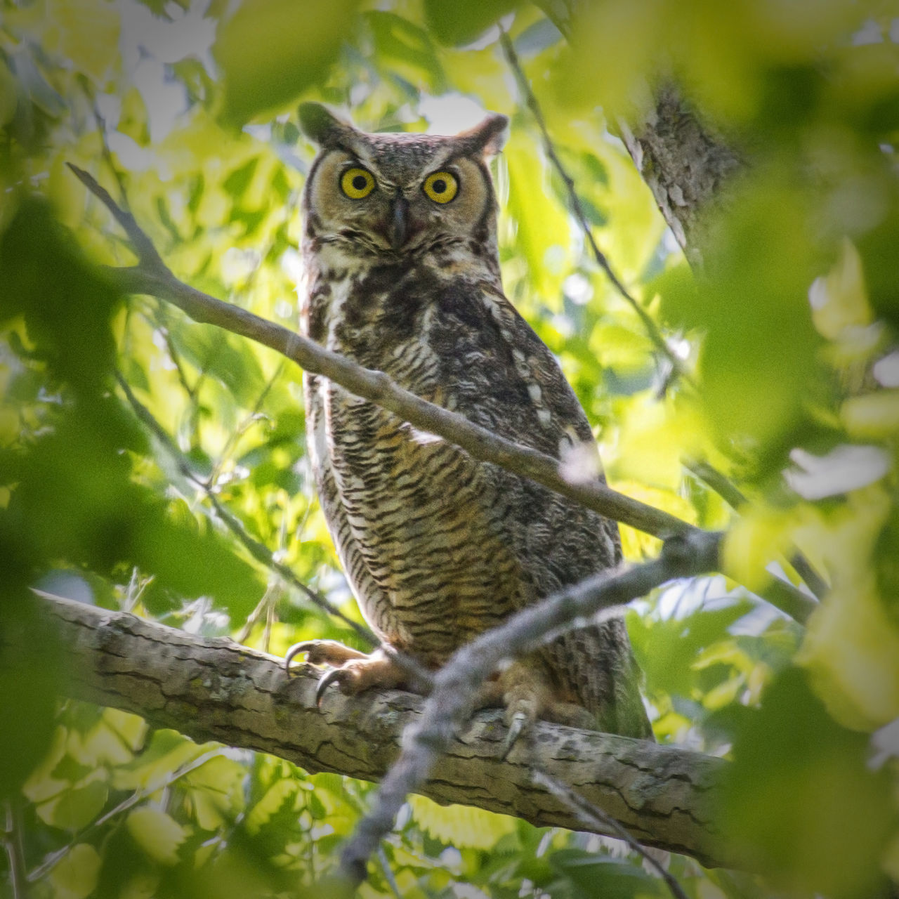 Close-Up Of Owl On Twig Against Sky