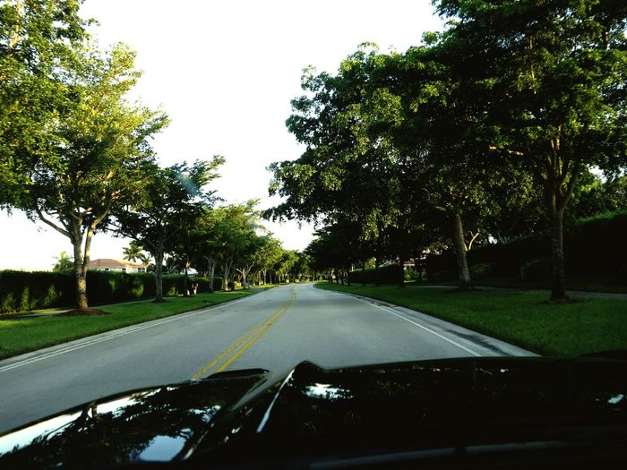 Drivers View Tree Lined Street