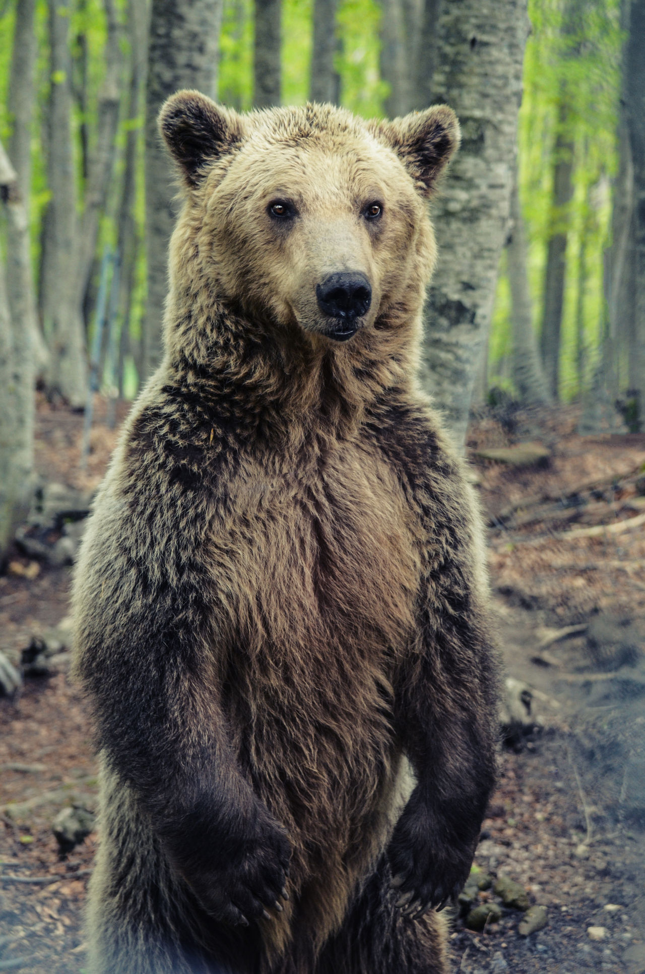 Beautiful stock photos of baer, Animal Body Part, Animal Hair, Animal Themes, Animal Wildlife