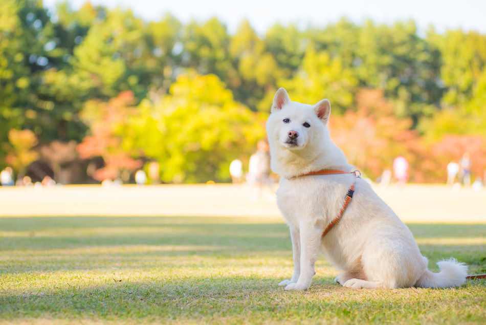 Beautiful stock photos of grass, Animal Themes, Canine, Day, Dog