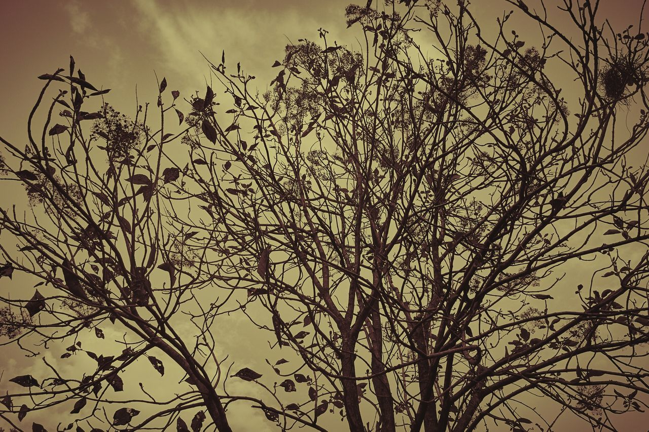 Nature Wild Branches Branches And Sky Haunting  Haunting Places Haunting..... Haunted Places Haunted? Canon60d Canon Canonphotography Manipal Manipal Intitute Of Technology