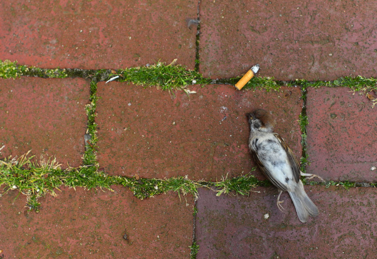 Directly Above Shot Of Dead Bird With Cigarette Butt On Footpath