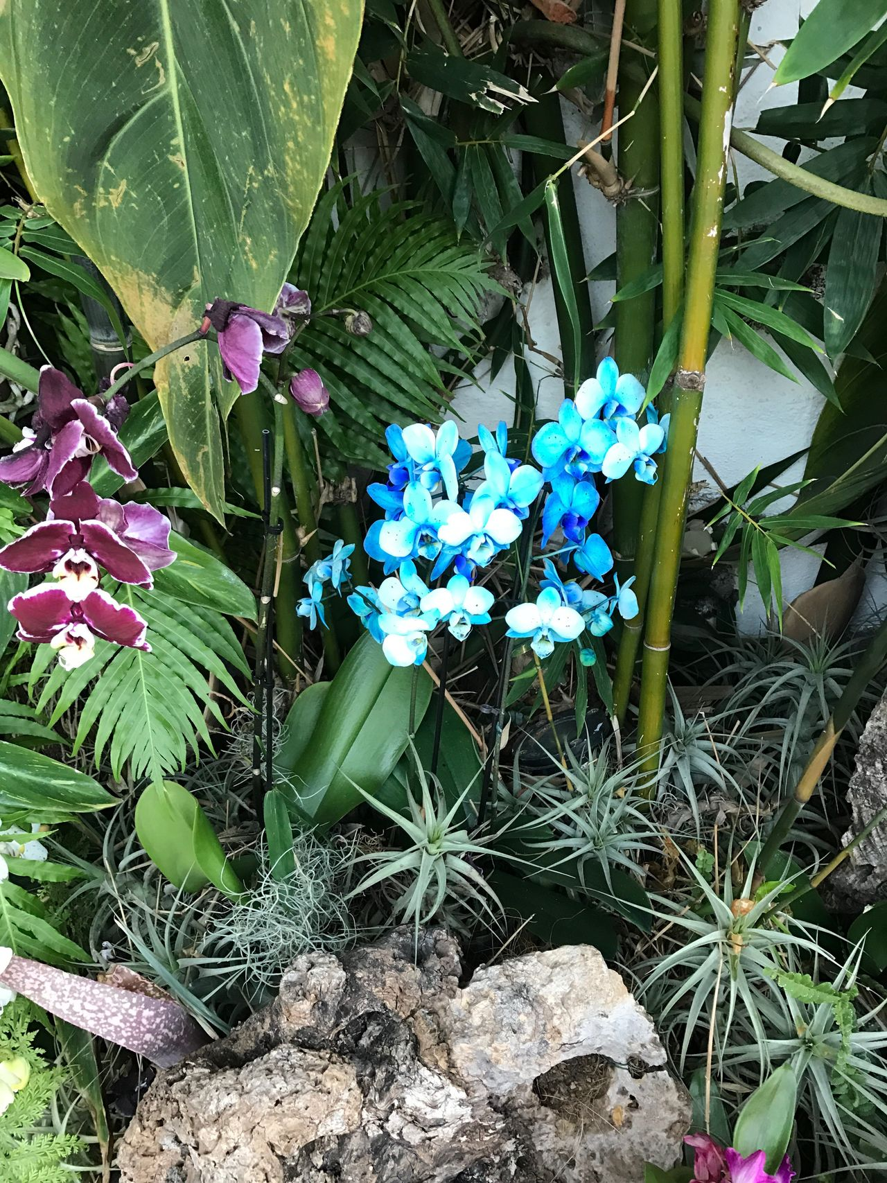 Green Color Flower Plant Growth Blue Outdoors Beauty In Nature Nature Day Leaf Freshness Fragility No People Blooming Flower Head Orchidee Rare Flowers