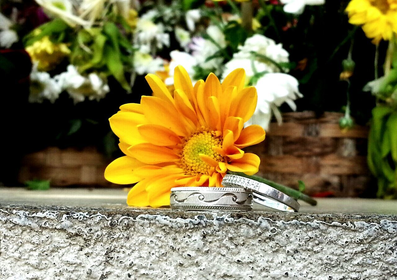 Two Is Better Than One Flower Ring Close-up Beauty In Nature Love Is In The Air Love Forever Love Life Loverings Both Yeohans