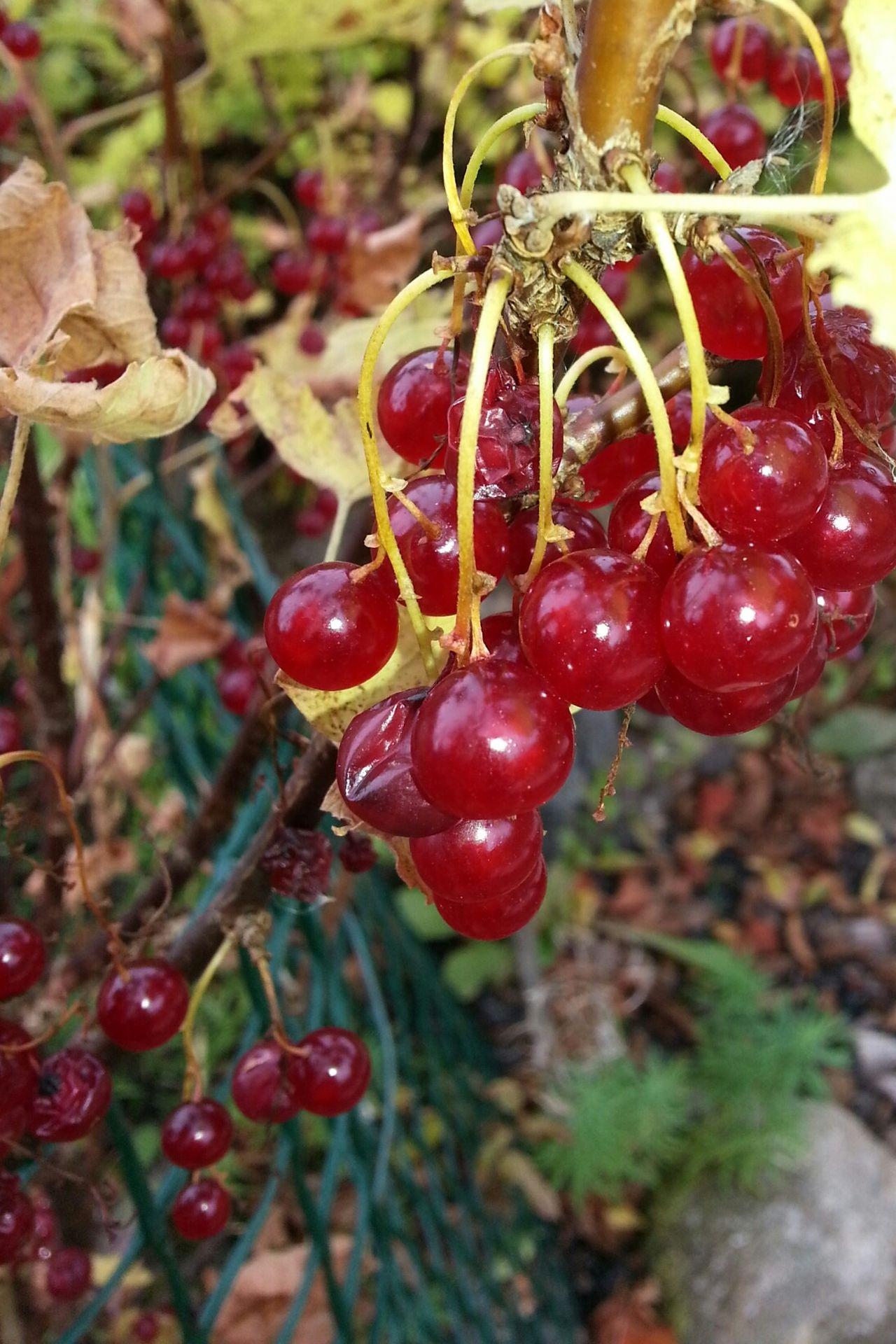Autumn Colors Eyemnaturelover Nature_collection Taking Photos