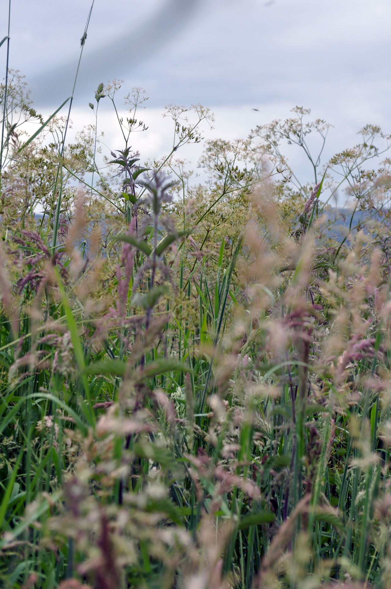 Beautiful stock photos of meadow, Day, Freshness, Growth, Meadow