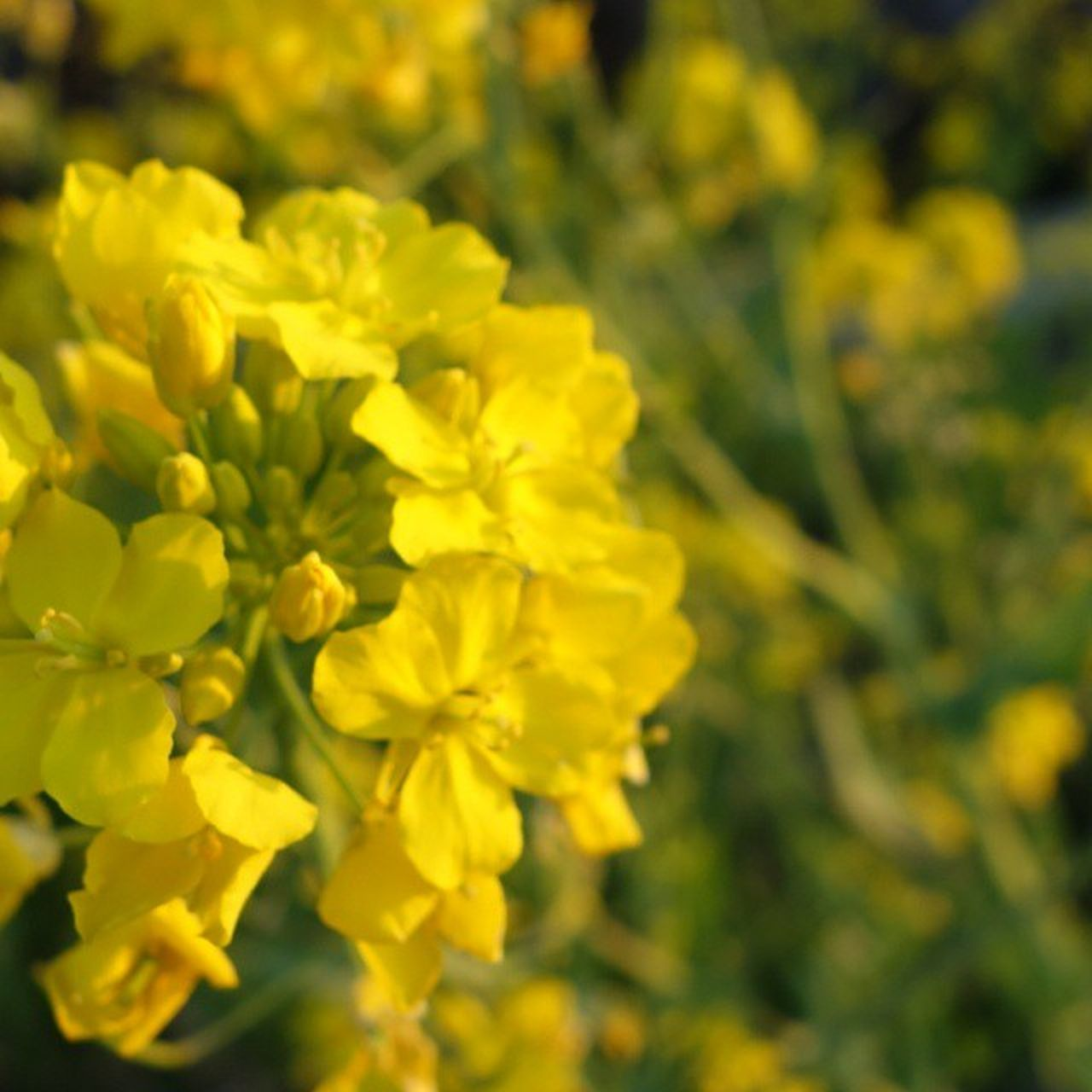 お花見♪ at りゅーちゃん家🌸 花見 BBQ Sakura 菜の花