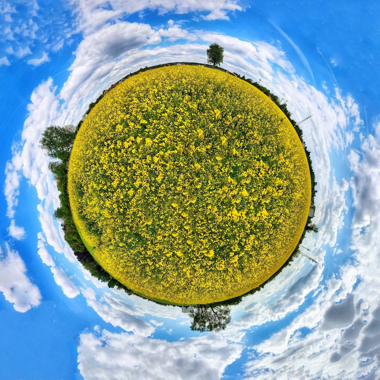 Cloud - Sky Gold Colored Sky Blue No People Rapeseed Rapeseed Field Sky And Clouds All Around  Tranquil Scene Rural Scene Abstract Photography EyeEm Best Shots RapeFlowers Tinyplanet Field Globe Little Planet Outdoors EyeEm Landscape Manipulation 360° Pictures  360 Panorama 360captur Summer