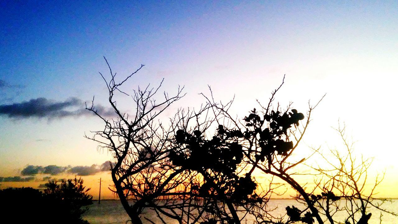nature, beauty in nature, silhouette, sunset, tranquility, sky, tranquil scene, outdoors, scenics, no people, growth, tree, plant, low angle view, branch, day