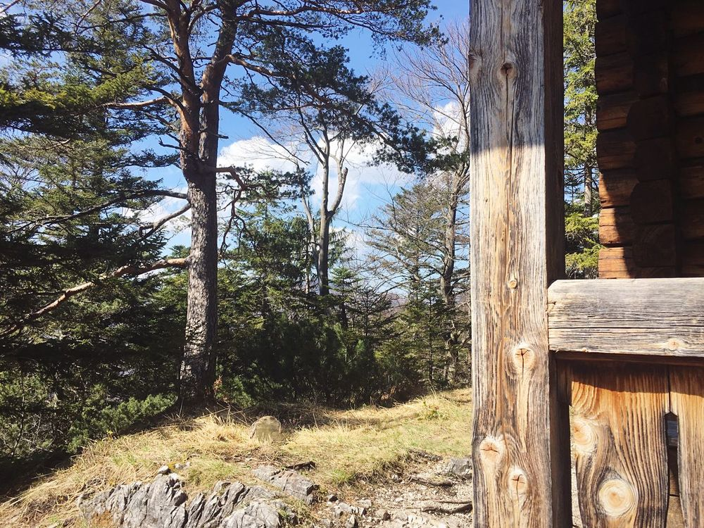 Tree Wood - Material Tree Trunk Day Outdoors No People Nature Forest Sunlight Growth Beauty In Nature Sky Close-up Cottage Eco Tourism Austria Mountains Woods Hidden Places Nature Reserve Nature Sunny Hiking Mountain Sun