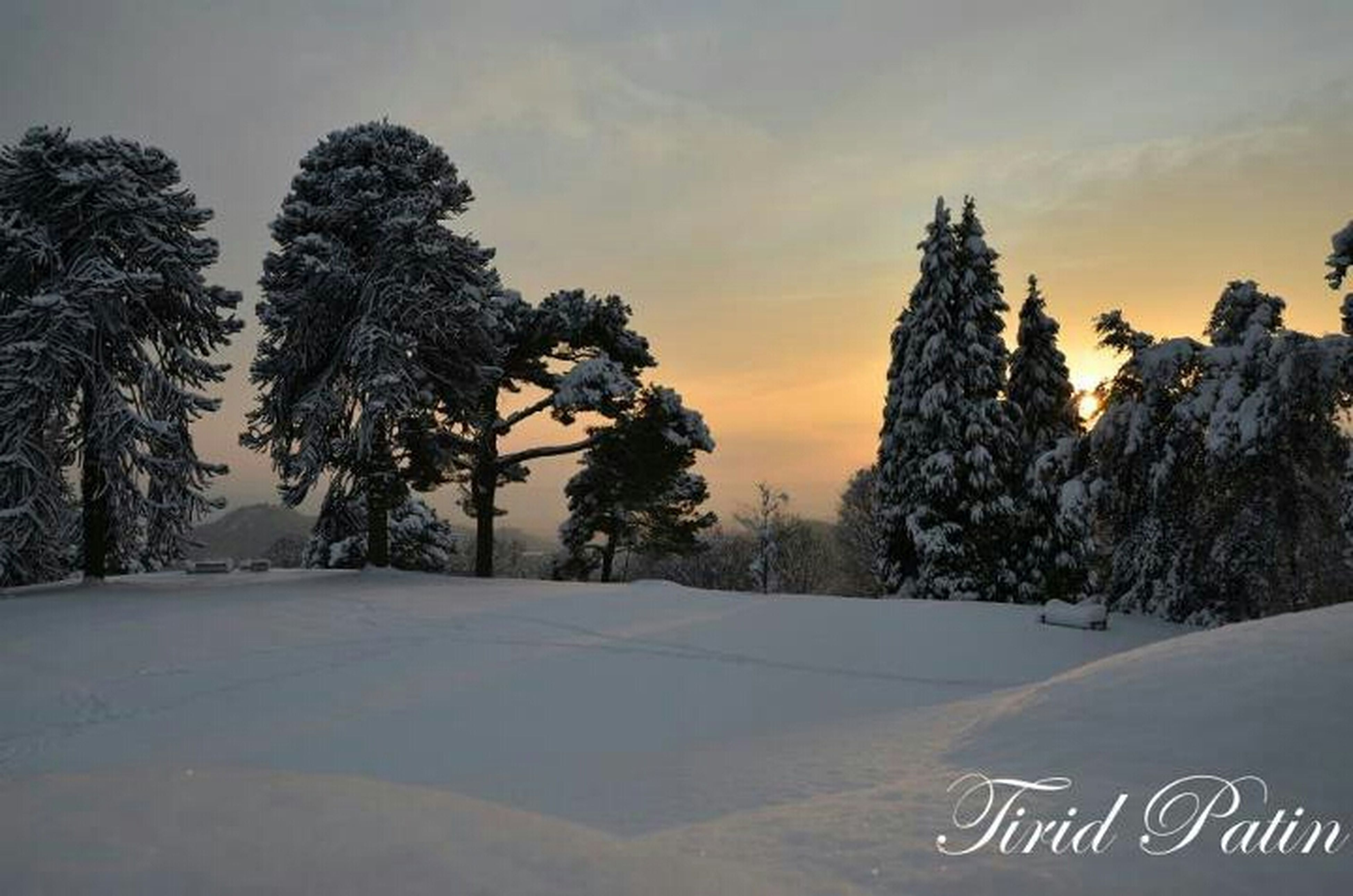 snow, winter, tree, cold temperature, sky, season, tranquility, tranquil scene, sunset, beauty in nature, scenics, weather, nature, cloud - sky, covering, landscape, no people, outdoors, cloud, non-urban scene