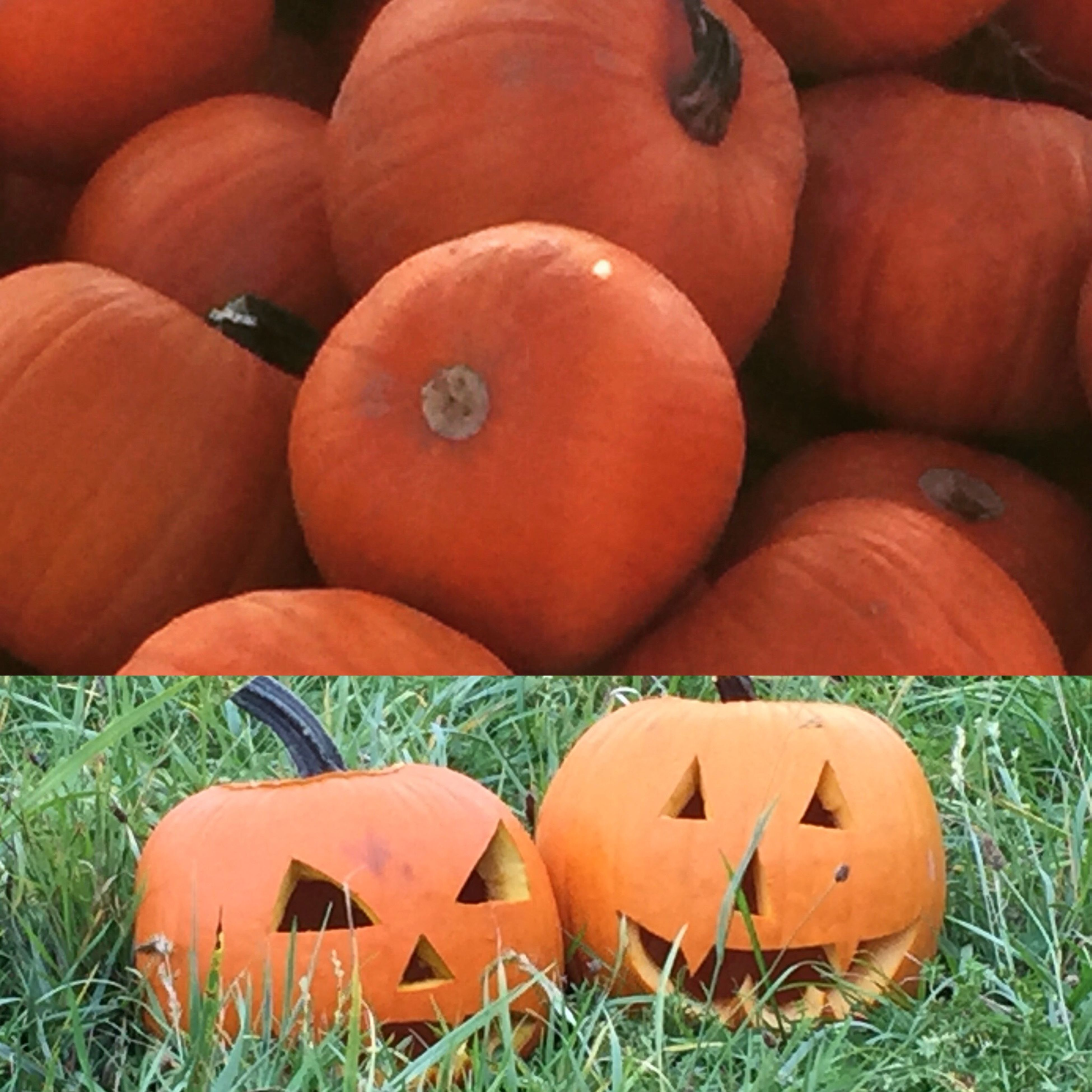 pumpkin, field, grass, orange color, no people, wood - material, close-up, halloween, outdoors, large group of objects, still life, day, tradition, group of objects, vegetable, anthropomorphic face, abandoned, variation, cultures, nature
