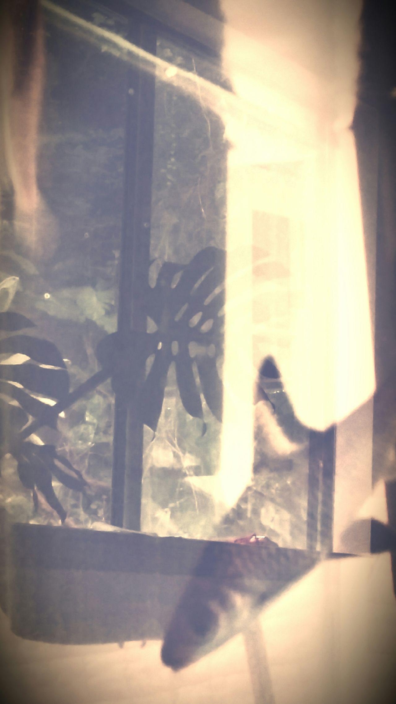 Fish Fish Tank Reflections No Edit