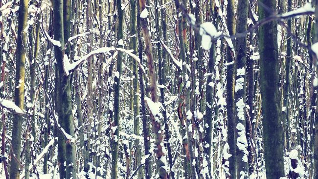 Forest Forest Germany Tree Winter