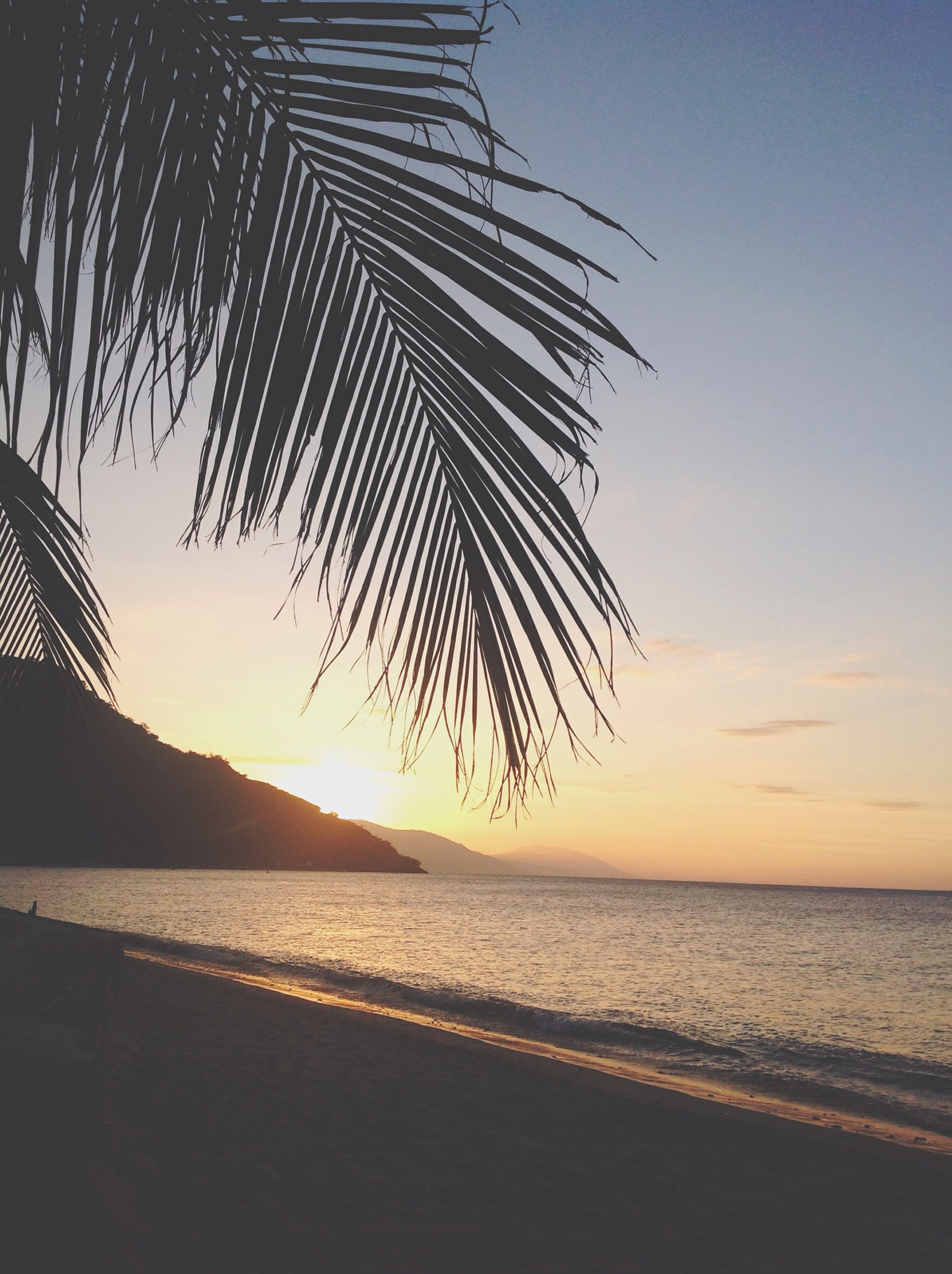 sea, palm tree, sunset, water, beach, tranquility, tranquil scene, scenics, beauty in nature, horizon over water, nature, silhouette, sky, tree, shore, idyllic, clear sky, sand, sunlight, growth
