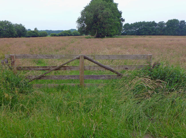 Beauty In Nature Farm Life Fence Fields Gate Grassy Landscape Meadow Nature Tranquil Scene Tranquillity Wooden Fence