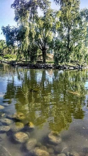 Reflection Tree Water Nature Lake Growth Outdoors No People Beauty In Nature Sky Day Backgrounds Reflection Lake Scenics Animal Themes