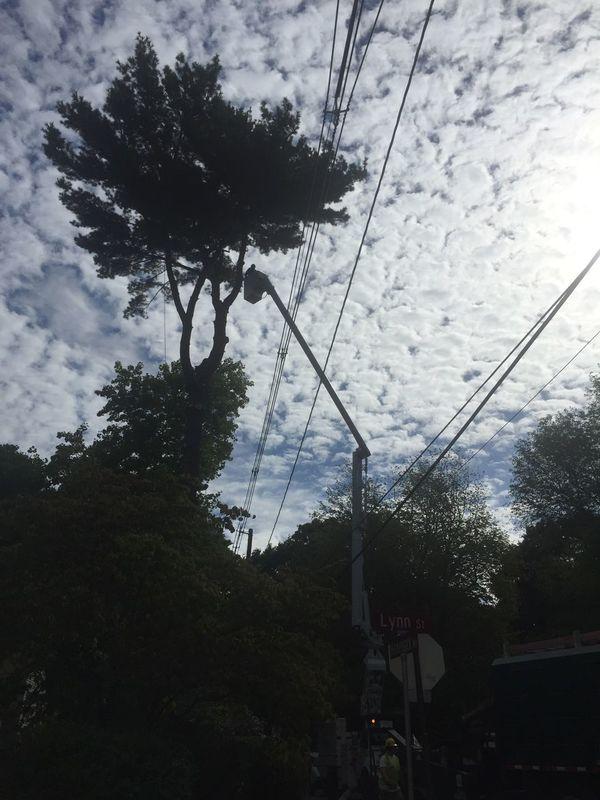 Reaching for the sky. Trees Sky Skyporn Sky_collection Clouds And Sky Sky And Clouds Sky Collection Skylovers