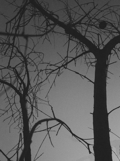 Blackandwhite Dark Iso12800 Nature NX2000 Silhouette Silo Trees VSCO Winter