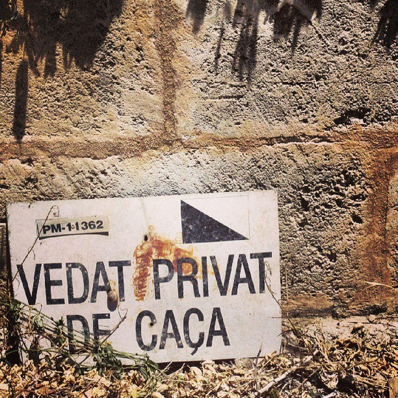 PMI Summer Campo Canon spanien España sommer spain illes balears hunt Jagd caza Mallorca majorca 2013 bestoftheday tbt tweegram