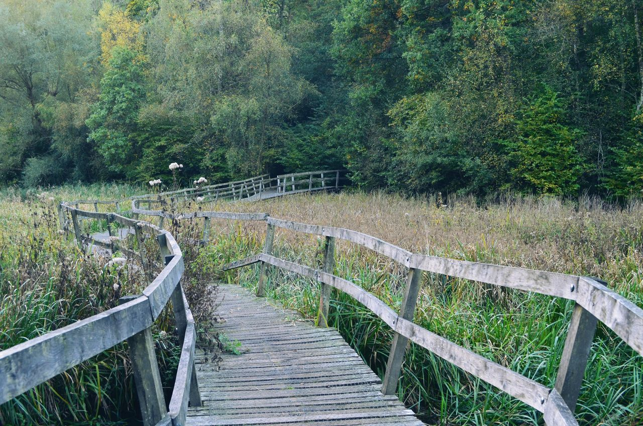 railing, tree, footbridge, day, nature, wood - material, tranquility, no people, outdoors, bridge - man made structure, growth, beauty in nature, grass, hand rail