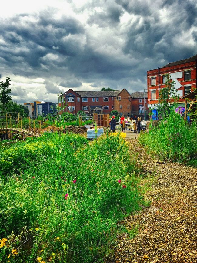Ecology Community Garden Growth Growing Nature Healthy Eating Growing Plants Growing Food Growing Vegtables Project Community Project Giving Back Ecological Footprint Hulme Garden Centre Dramatic Sky