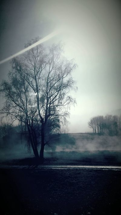 Fog Foggy Morning Fogy Silence Pure Nature Tree Landscapes With WhiteWall