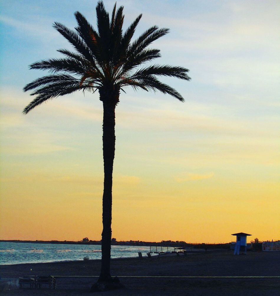 Palm Palm Tree Sunset Romantic Exotic Larnaca Larnaka Larnaca, Cyprus Larnaca Beach Larnaka Cyprus Cyprus Kypros Finikoudes IPhone Photography IPhoneography IPhone 6s Mediterranean